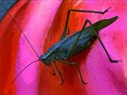 Grasshopper Sat Final